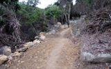 Đà Nẵng: Cách chức 2 lãnh đạo Hạt kiểm lâm để dân tự ý phá rừng