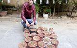 Bắt nam thanh niên tự gieo trồng cần sa số lượng lớn