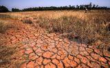 Vài tháng tới, hạn mặn ở ĐBSCL còn khốc liệt hơn nhiều