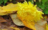 Ý nghĩa các loại hoa đi tảo mộ trong tiết Thanh Minh