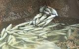 Điều tra nghi vấn ống xả thải khổng lồ dưới biển Vũng Áng
