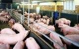 Loại bỏ chất cấm độc hại trong chăn nuôi: Chỉ cần 7 tháng?
