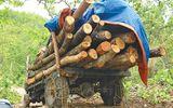 Mật phục những kẻ mang cả công nông đi phá rừng ở Tây Nguyên