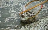 Nghiêm cấm người dân sử dụng, kinh doanh, tiêu thụ thủy, hải sản chết bất thường