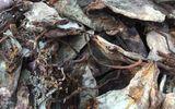 Thanh Hóa: Hàng chục tấn mực thối trên đường ra Bắc bị phát hiện