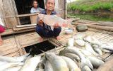 Người dân Thanh Hóa thiếu nước sinh hoạt sau vụ cá chết hàng loạt