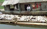 Bộ Tài nguyên và Môi trường vào cuộc vụ cá chết hàng loạt trên sông Bưởi