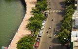 Hàng nghìn cây xanh ở Đà Nẵng được mua bảo hiểm