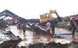 """Phát hiện cá voi """"khủng"""" chết nổi ở vùng biển Nghệ An"""
