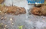 """Trại lợn """"đầu độc"""" nguồn nước: Chính quyền xử lý theo hương ước"""