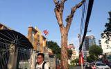 Hàng loạt cây cổ thụ bị bức tử bằng hóa chất giữa Sài Gòn