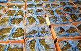 Bắt giữ lá cây lạ trị giá triệu đô ở sân bay Tân Sơn Nhất