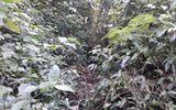 Voi rừng xuất hiện tại một xã miền núi tỉnh Hà Tĩnh