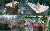 Cháu phó chủ tịch huyện thâu tóm cả cánh rừng