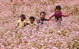 Lên lịch phượt cùng những mùa hoa tuyệt đẹp ở Việt Nam
