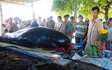 Phát hiện cá voi nặng 400kg trôi dạt vào bờ