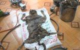 Hà Tĩnh: Bắt giữ 1 vụ nấu cao hổ trái phép