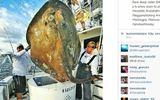 """Bắt được cá """"quái vật"""" nặng 362 kg"""