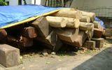 Bắt giữ 2 xe ô tô chở trên 6m3 gỗ lậu