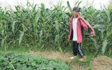 Nam sinh trốn học hai lần làm nhục chị nông dân