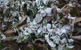 Sau tuyết rơi, sương muối lại phủ trùm Lào Cai