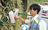 Đà Lạt: WiFi miễn phí hết tết Giáp Ngọ