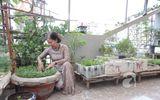 Người Sài Gòn tự làm nông dân tại gia để được ăn rau sạch
