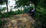 Ám ảnh về những hài nhi bị vứt bỏ ở bãi rác Nam Sơn
