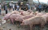 """Lật xe tải, 50 chú lợn """"tung tăng"""" khắp phố"""