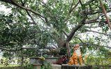 Chuyện ly kỳ về tượng đá mẹ bồng con ở Thanh Hóa