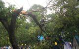 Sài Gòn mưa đầu mùa, cây xanh đổ rạp, giao thông tắc nghẽn