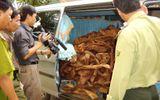 Quảng Bình: Kiểm lâm bị vây đánh sau khi bắt gỗ sưa