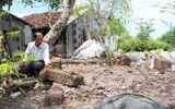 Cà Mau: Phát hiện 2 ngôi mộ cổ trong vườn nhà