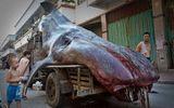 """Phát hiện """"quái vật biển"""" hình thù kỳ dị dài gần 5m ở Trung Quốc"""