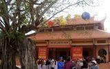 Cây bồ đề 3 thân được công nhận là Cây di sản Việt Nam