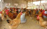 Điện lực Hải Dương đền gần 1 tỉ đồng vì làm chết gà