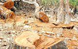 Hàng loạt nhà đầu tư đến Đắk Nông: Lập dự án để phá rừng, bán đất