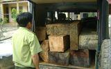 Tài nguyên - Bắt giữ vụ vận chuyển 0,7m3 gỗ lậu bằng xe Uoat