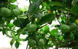 4 cây ở quần đảo Trường Sa được công nhân là Cây Di sản Việt Nam