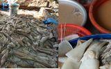Rùng mình xưởng tẩy trắng cá mực bằng hóa chất bên sông Hồng
