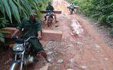 Ngang nhiên vận chuyển gỗ lậu bằng xe máy ở Quảng Nam