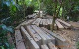 Tiếng kêu cứu của rừng xanh từ đại ngàn Quảng Nam