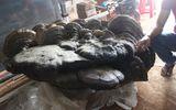 Cây nấm khổng lồ nặng gần 2 tạ, được trả giá tiền tỷ?