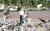 Người đàn ông cho ngàn chim bồ câu ăn trên Công viên Biển Đông