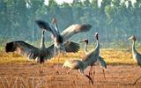 Tài nguyên - Bảo tồn 57 nguồn gen quý hiếm tại Vườn quốc gia Tràm Chim