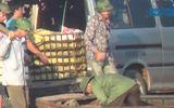 Buôn lậu diễn ra công khai tại cửa khẩu Móng Cái
