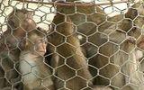 Bình Định: Bắt quả tang vụ buôn bán động vật quý hiếm
