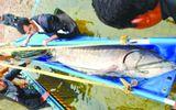 TQ: Bắt được cá tầm khổng lồ dài 3,3 mét trên sông