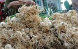 Sức khoẻ - Củ nén có giá kỷ lục vì rắn lục đuôi đỏ