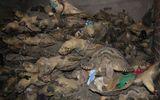 Thảm sát rùa biển: Tội ác bao giờ chấm dứt?